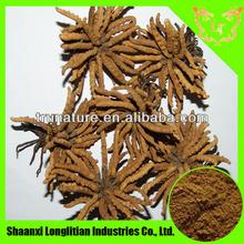 Top Quality Cordyceps Sinensis Extract 4:1/Cordyceps Sinensis