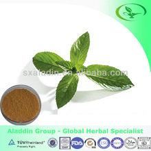 Pure natural mint extract in bulk supply