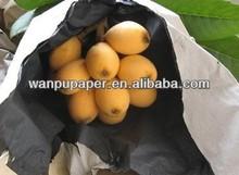 loquat covering paper bag