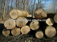 White Ash Veneer Logs