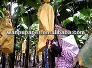 protective banana paper bag / banana covering bag