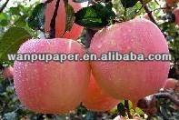 protective fuji apple paper bag