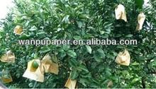 Orange growing paper bag