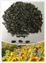 Alimentação de aves de alimentos girassol preto óleo de girassol selvagem alimento animal