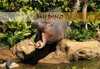 cartoon character hippo decorous character figure model