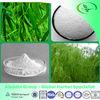 GMP factory Willow Bark extract/Salix babylonicaL extract/Cortex Salicis P.E