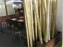 Bambo Fence