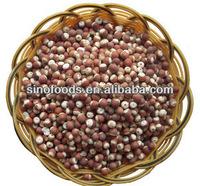 Qian Shi-Gordon Euryale Chinese herb medicine natural herb medicine