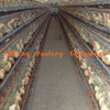Hot galvanized Metal Bird Breeding Cage