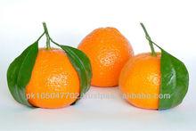 fresh mandarin kinnow citrus