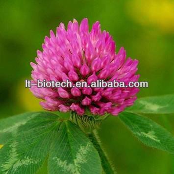 Red Clover extract:Formononetin 40% Isoflavone