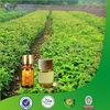 Pure Pharmaceutical Grade Oil of Eucalyptus Natural Substance