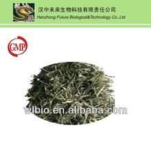 2013 new season Eucommia tea