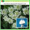 Manufacturer Supply Radix Angelicae Dahuricae Extract Imperatorin/Imperatorin 98%/Imperatorin 95%