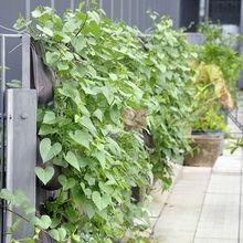 Supply popular green wall vertical wall planter planting bag