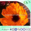 alta qualidade luteína flor de calendula officinalis extrato
