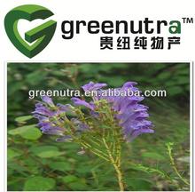 Radix Scutellariae Extract/Scutellaria Baicalensis Extract