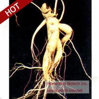 100% natural gold powder korean red ginseng extract