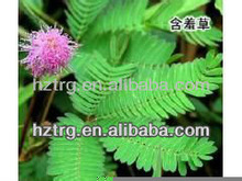 100% Natural Sensitive Plant Extract/mimosa tenuiflora extract