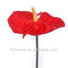 Todos los tipos de flores venta