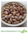 Récolte de haricots secs 2013 d'exportation de gros pour la cuisson
