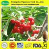 100% Natural Acerola cherry Extract/Acerola cherry Extract powder/acerola fruit extract