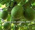 العضوية استخراج siraitia grosvenorii، المحليات، صفر السعرات الحرارية، الراهبيمكن انتزاع الفاكهة