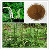 High quality natural Black cohosh P.E. Triterpene glycosides 10% (HPLC)