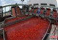 alta qualidade pura de tomate xinjiang origem de pasta de tomate