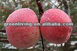 2014 fresh fuji apples sweet apples organic apples