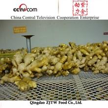China Ginger And Garlic Export Company