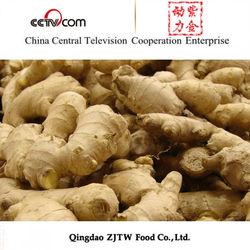 Supply 200G 250G Ginger For Dry Ginger Buyers