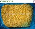 congelado iqf cubo de mango