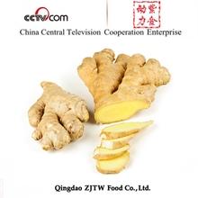 250G Bulk Fresh Ginger For Usa Market