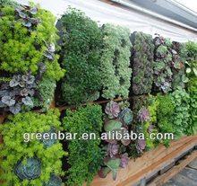 Vivono pareti verdi aquaponics modulare fioriere, inibitore UV