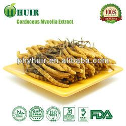 Yarsagumba/Cordyceps extract