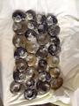 pulido de amonites procedentes de marruecos