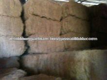 Coconut fiber grade A,B,C