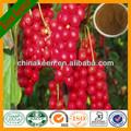 Schizandra extrato/alta qualidade schizandra extrato/protetor do fígado