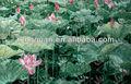 glasmosaikfliese Kunstwerk wand Hintergrundbild Muster wie Haus baustoff