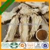 Angelica sinensis P.E./Chinese Angelica/Radix Angelicae Sinensis