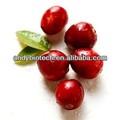 Natural puro de fruta cranberry extrato 10:1