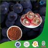 Organic OPC Grape Seed, Organic Grape Seed