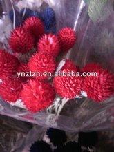 long-lasting flower fruits for flower crafts arrangement