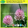trifolium pretense extract 8%-80% Isoflavones Red Clover P.E/trifolium pretense p.e