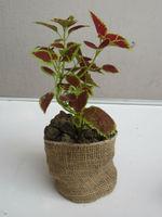 Seedling Jute Nursery Pot