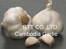 Cambodia Garlic