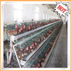 good price poultry cages for laying hen from Henan Huaxing Poultry Equipments Co., Ltd.