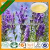 High Quality Radix Scutellariae/Radix Scutellariae.P.E. Pure Baicalin/Wogonin