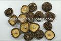 superior de calidad de setas shiitake seco